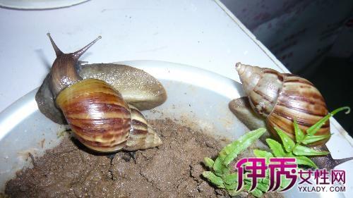 鱼油上爬?要是在脸有毒啊?对蜗牛有伤害?胶襄皮肤海豚多少钱一瓶60克每瓶图片