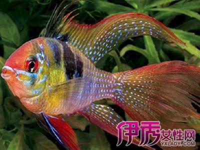 维护大黄鱼品牌形象