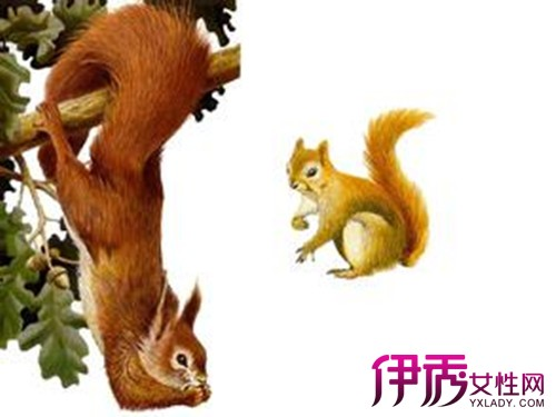 【图】小松鼠的大尾巴图片大全