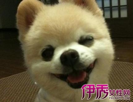 【可爱的俊介犬图片】【图】揭秘可爱的俊介犬图片