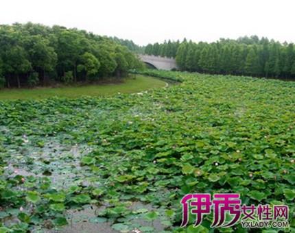 【图】上海海湾国家森林公园介绍 带你进入自然人工城市生态森林