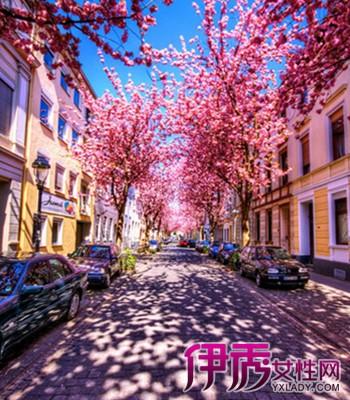 【图】德国樱花街道壁纸