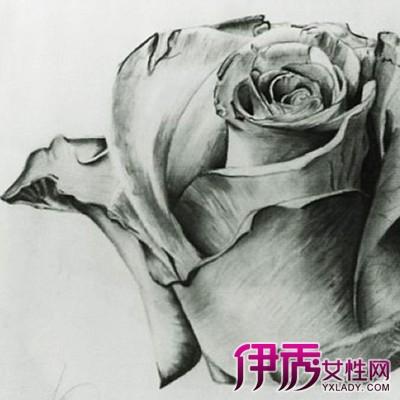素描玫瑰花教程图解 6大技法教你画出美丽玫瑰图片