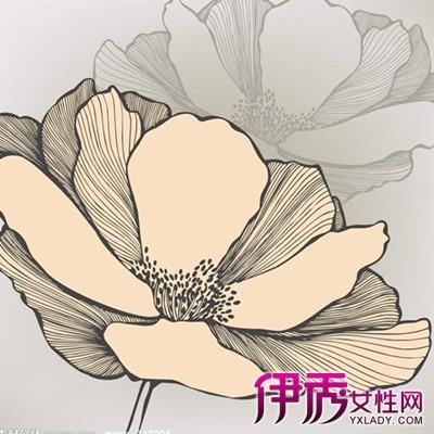 简单手绘花朵铅笔画欣赏 带你了解铅笔画的简介