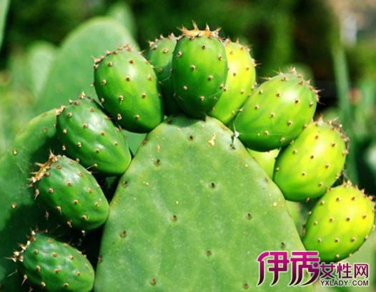 【图】仙人掌的特点是什么 详述其四大种植方