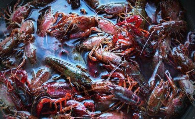 小龙虾怎么清洗,麻辣小龙虾怎么做2.jpg