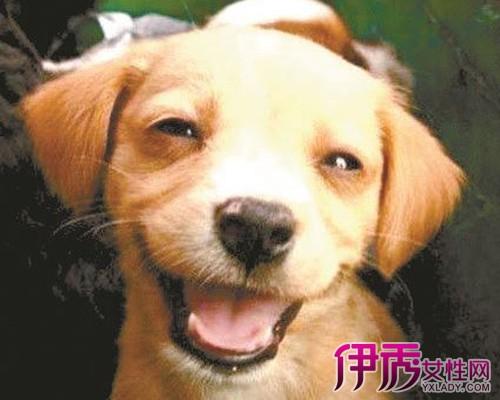 小狗脑部受伤会引起抽搐吗 相?#25293;?#30340;狗狗会好起来的