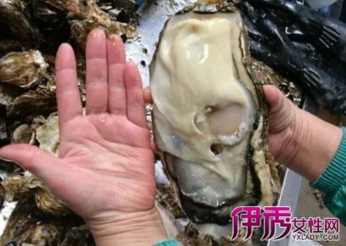日本核灾区现巨型生蚝 日本福岛巨型生蚝和核灾辐射有关吗