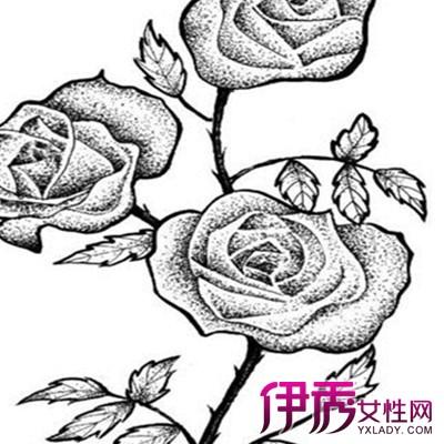 【图】欣赏好看简单素描花朵图片 为你介绍素描的几个分类-好看 简单 图片