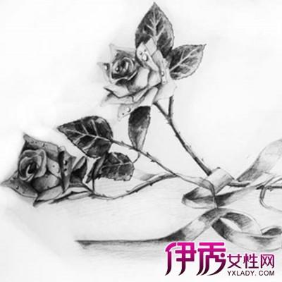 【图】欣赏玫瑰素描画 教你如何简单绘画漂亮的玫瑰-玫瑰素描画图片
