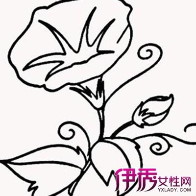 【图】植物花卉简笔画图片欣赏 简单线条勾勒出美丽图案-植物花卉简