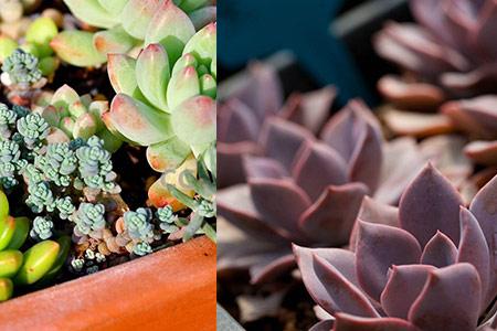 【图】多肉植物怎么浇水这样做植株不会黑腐