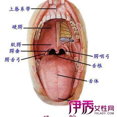 舌头有哪些作用