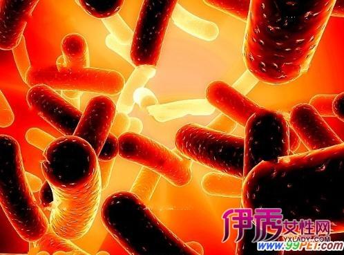细小病毒怎么治疗