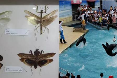 上海动物园游览图_【上海动物园】【图】了解这些 带你玩转上海动物园科教馆_伊秀 ...